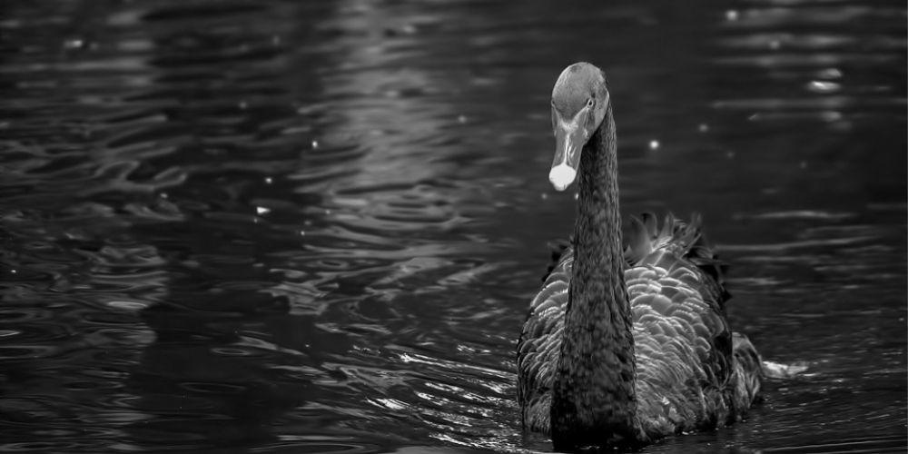 Managing Black Swan Risks