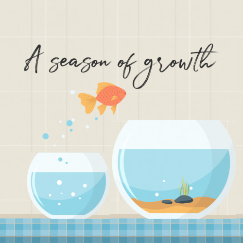A season of Growth Website Square