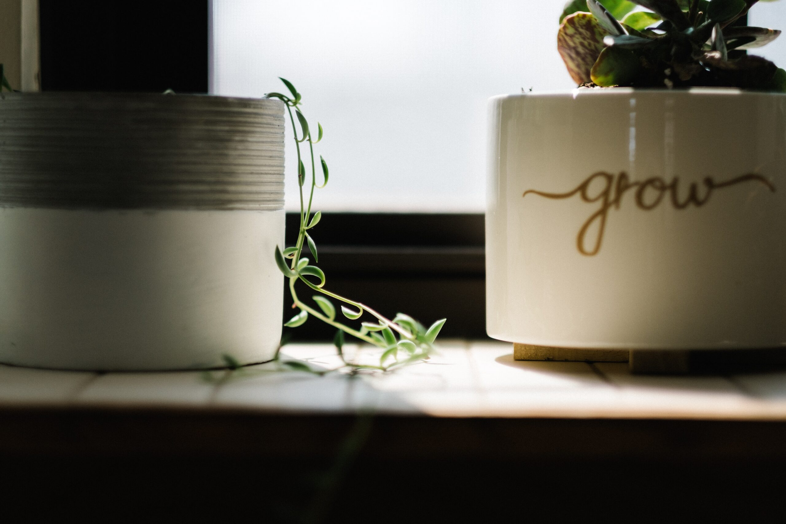 Coaching helps you to grow professionally