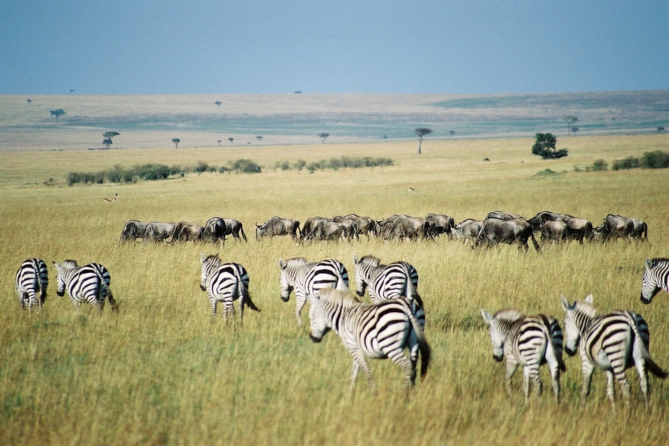 Kenya-Safari