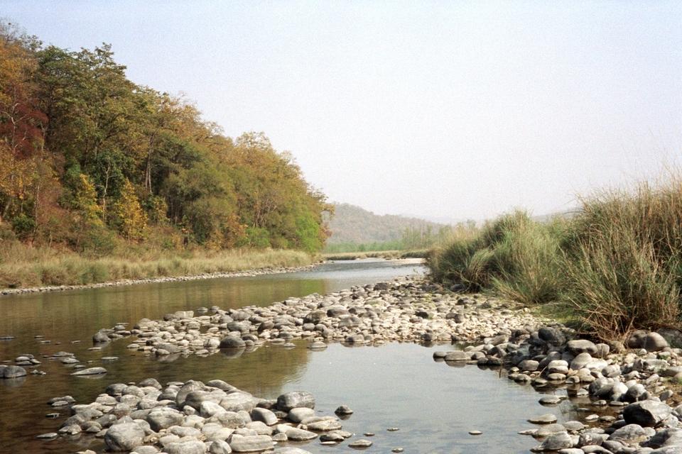 Corbett National Park river
