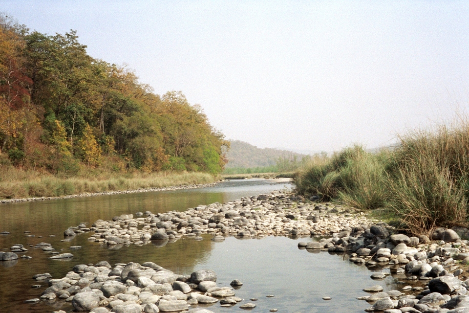 Corbett National Park river