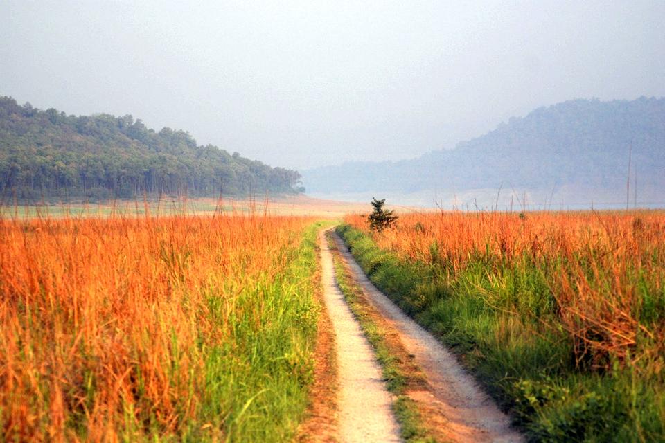 Grasslands, Jim Corbett National Park