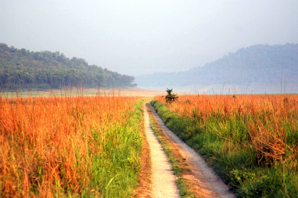 Grasslands, Jim Corbett National Park