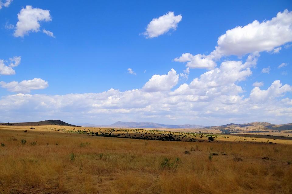 Maasai Mara Typical Scenery