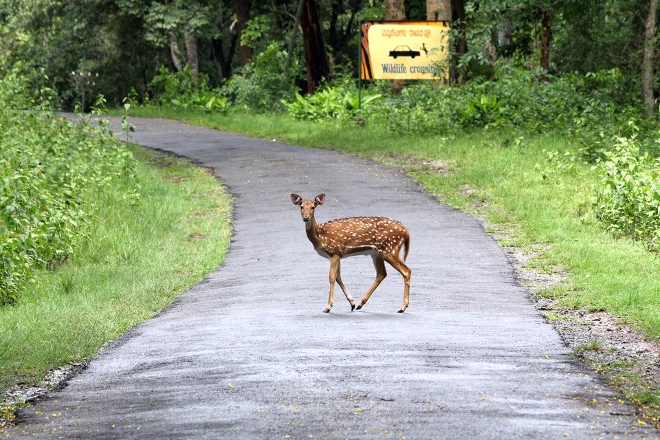 Nagarhole National Park, Coorg
