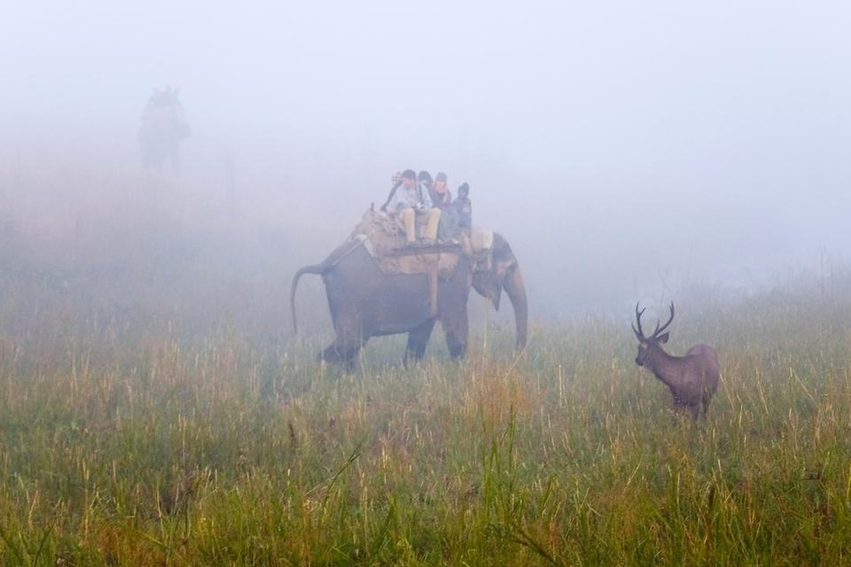Sambar Deer, Jim Corbet National Park