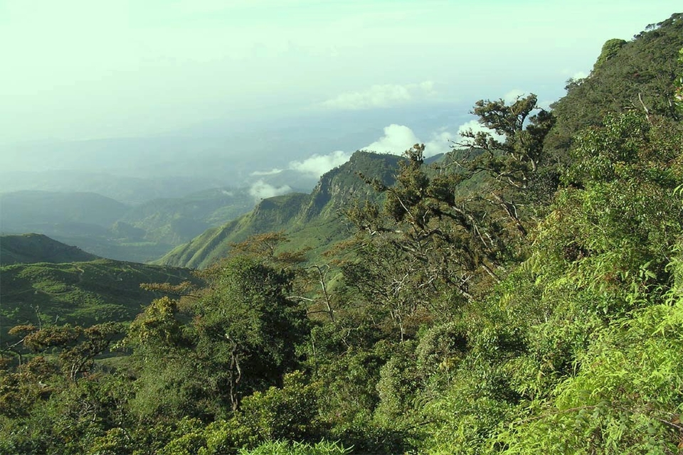 Sri Lanka mountain forest