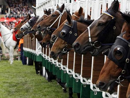 New Zealand Horse Racing Stables Appeal to Stay Open Amid Global Health Crisis