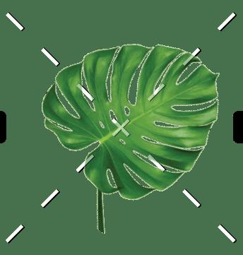 demo-attachment-97-leaf
