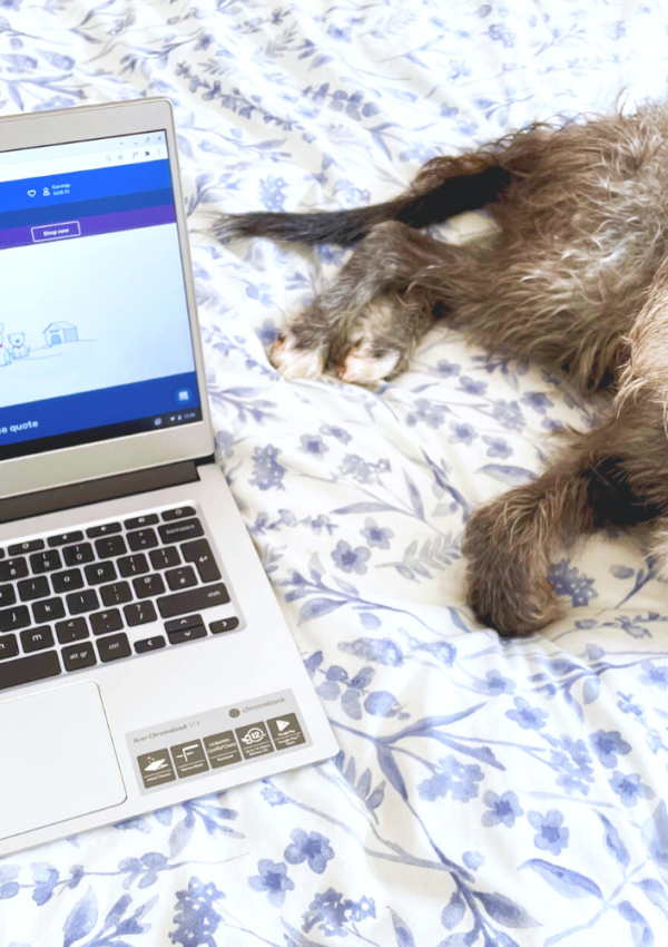 How To Get Cheap Pet Insurance With Quidco Compare (& £20 Cashback!)