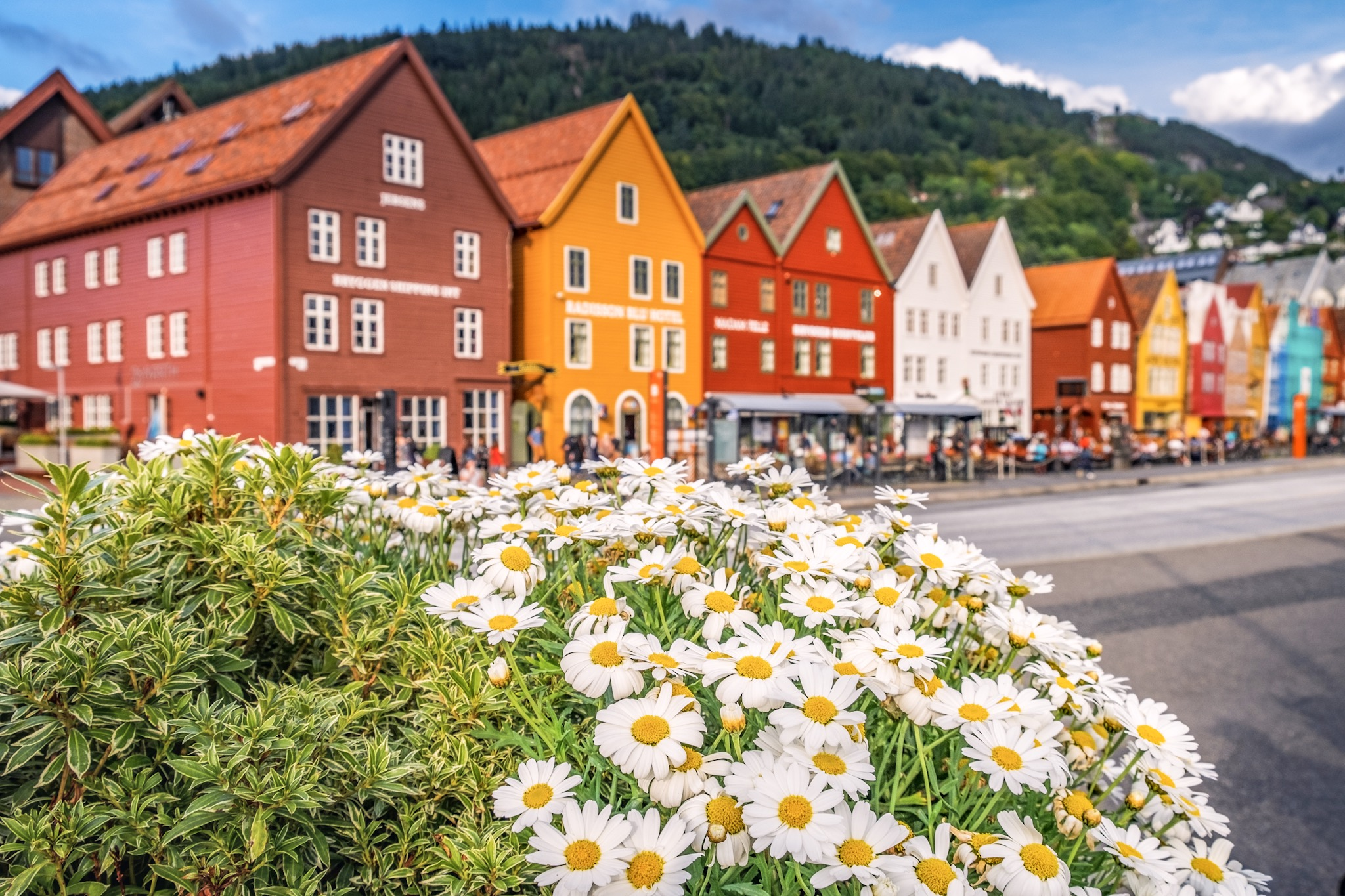 Daisies in front of the colourful houses of Bryggen in Bergen, Norway. 5 Days in Bergen.