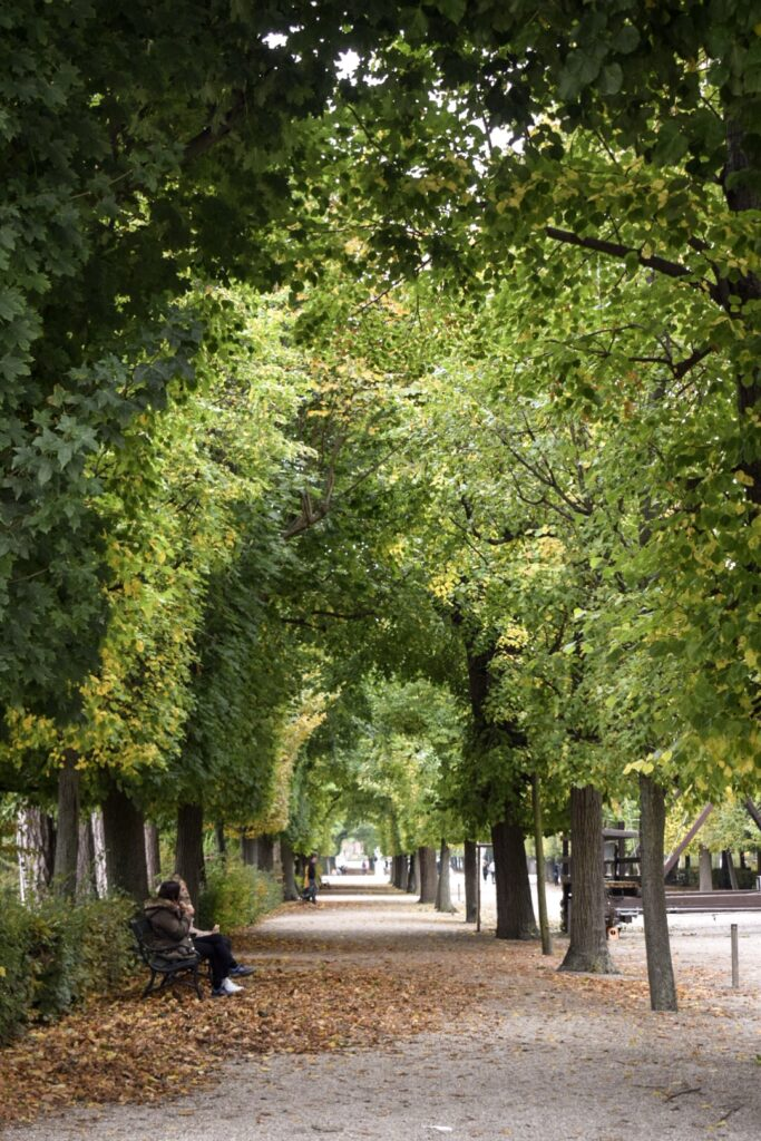An arched tree lined walkway at Schönbrunn Palace gardens in Vienna.