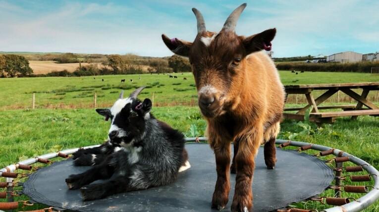 Court-Farm-Holidays-Animal-Field