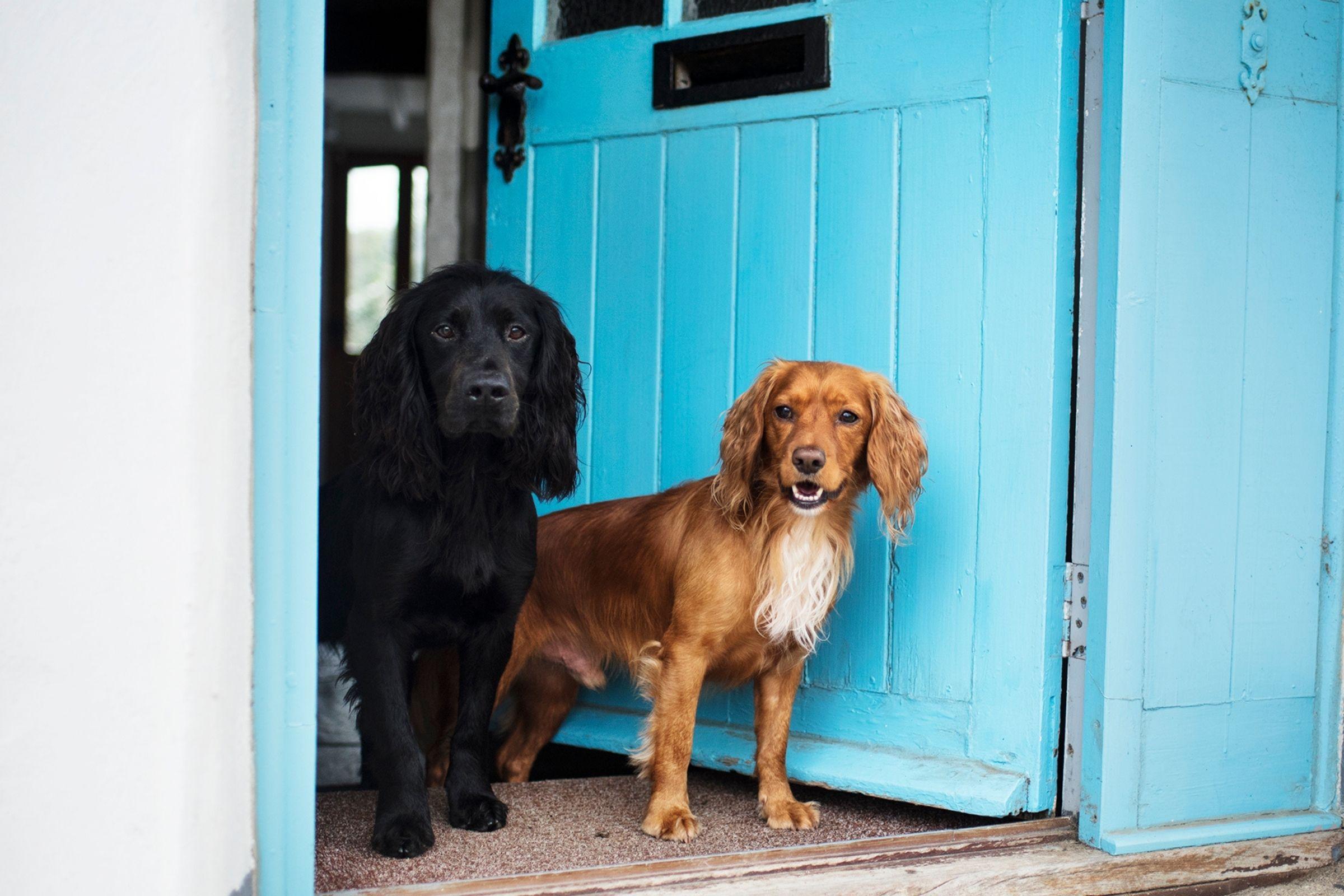 Court-Farm-Holidays-Dog-Friendly