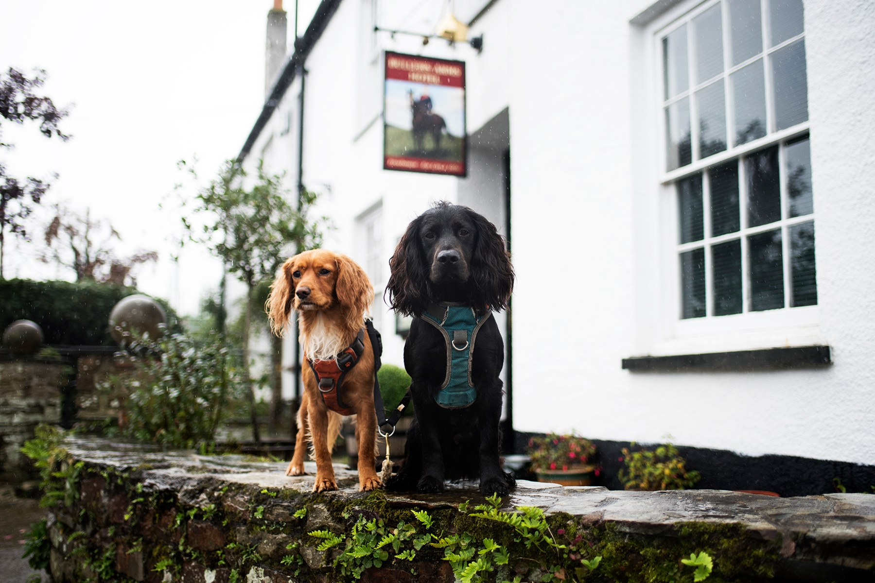 Dog Friendly Attractions Cornwall