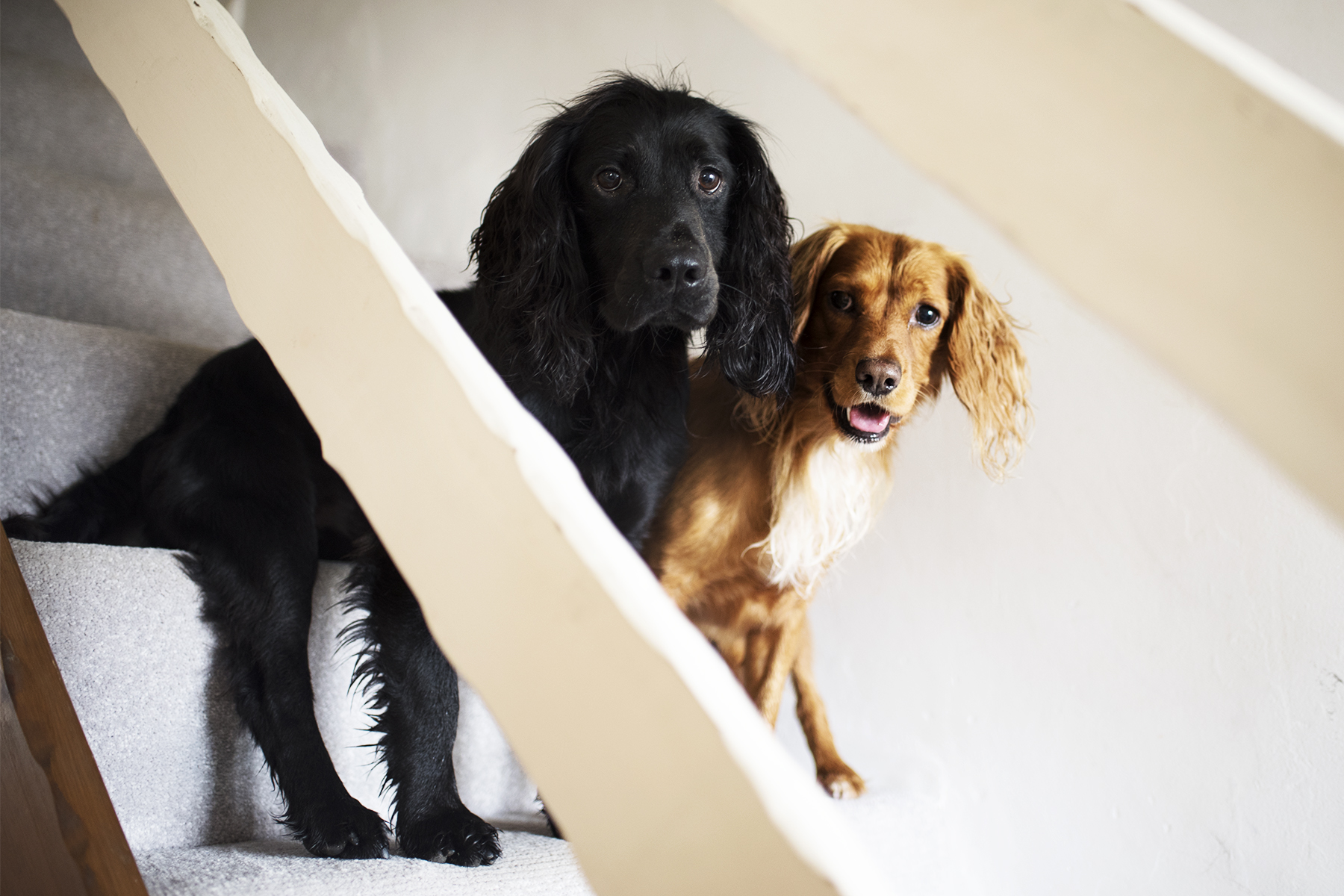 Dog Friendly Accommodation Bude