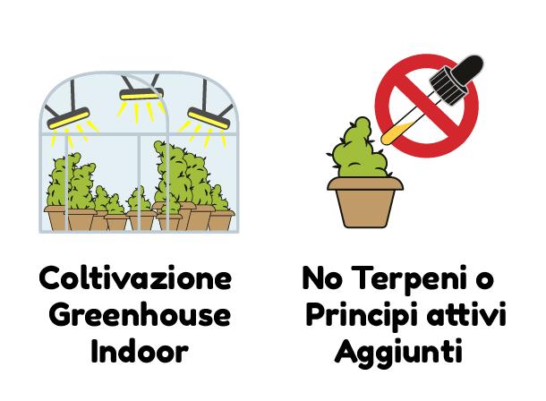 COLTIVAZIONE GREENHOUSE INDOOR NO TERPENI O PRINCIPI ATTIVI AGGIUNTI