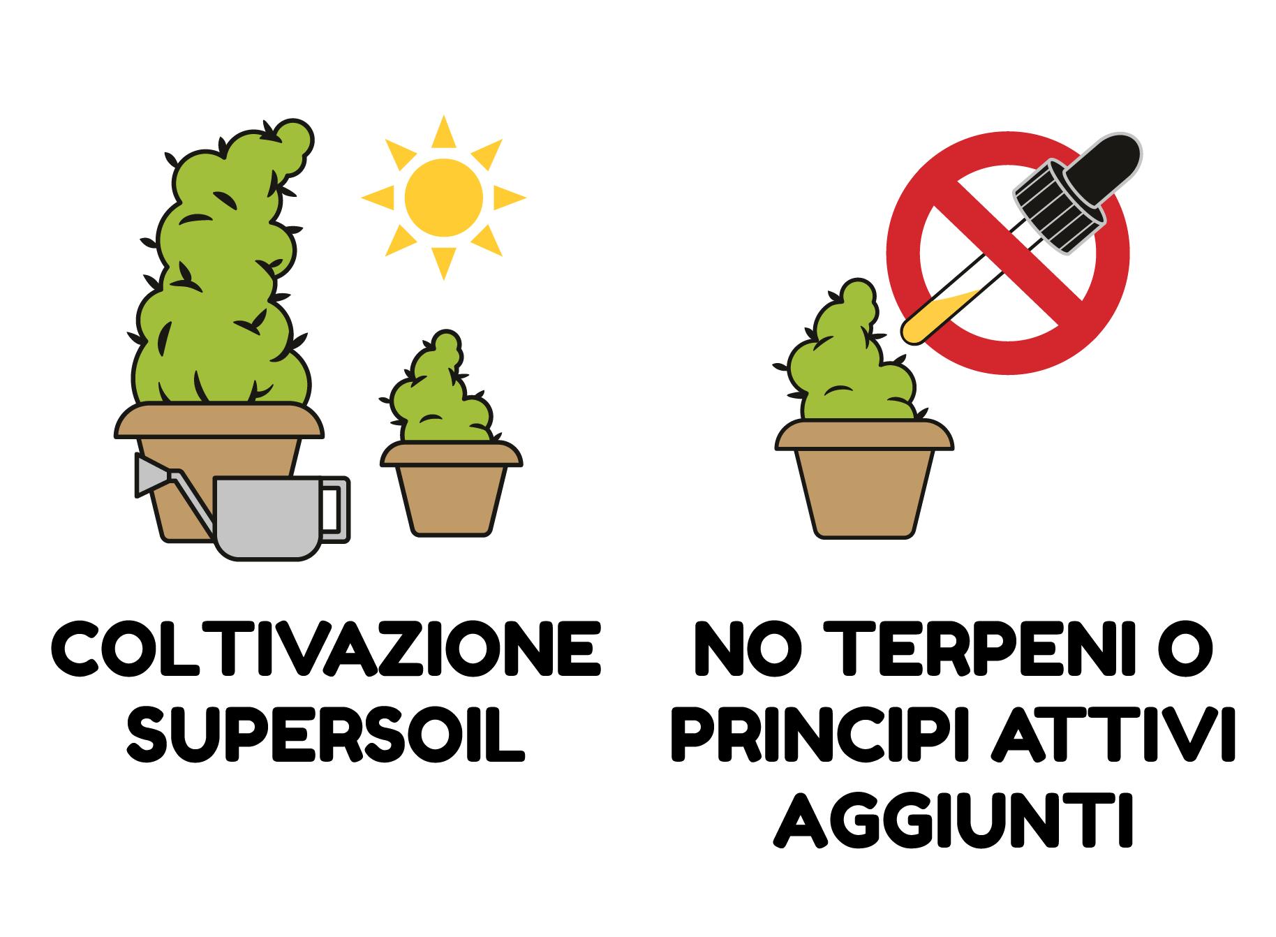 COLTIVAZIONE SUPERSOIL - NO TERPENI O PRINCIPI ATTIVI AGGIUNTI
