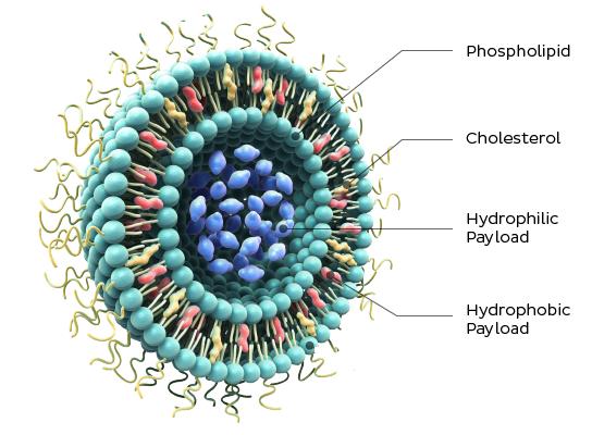 Phospholipids For Pharmaceuticals