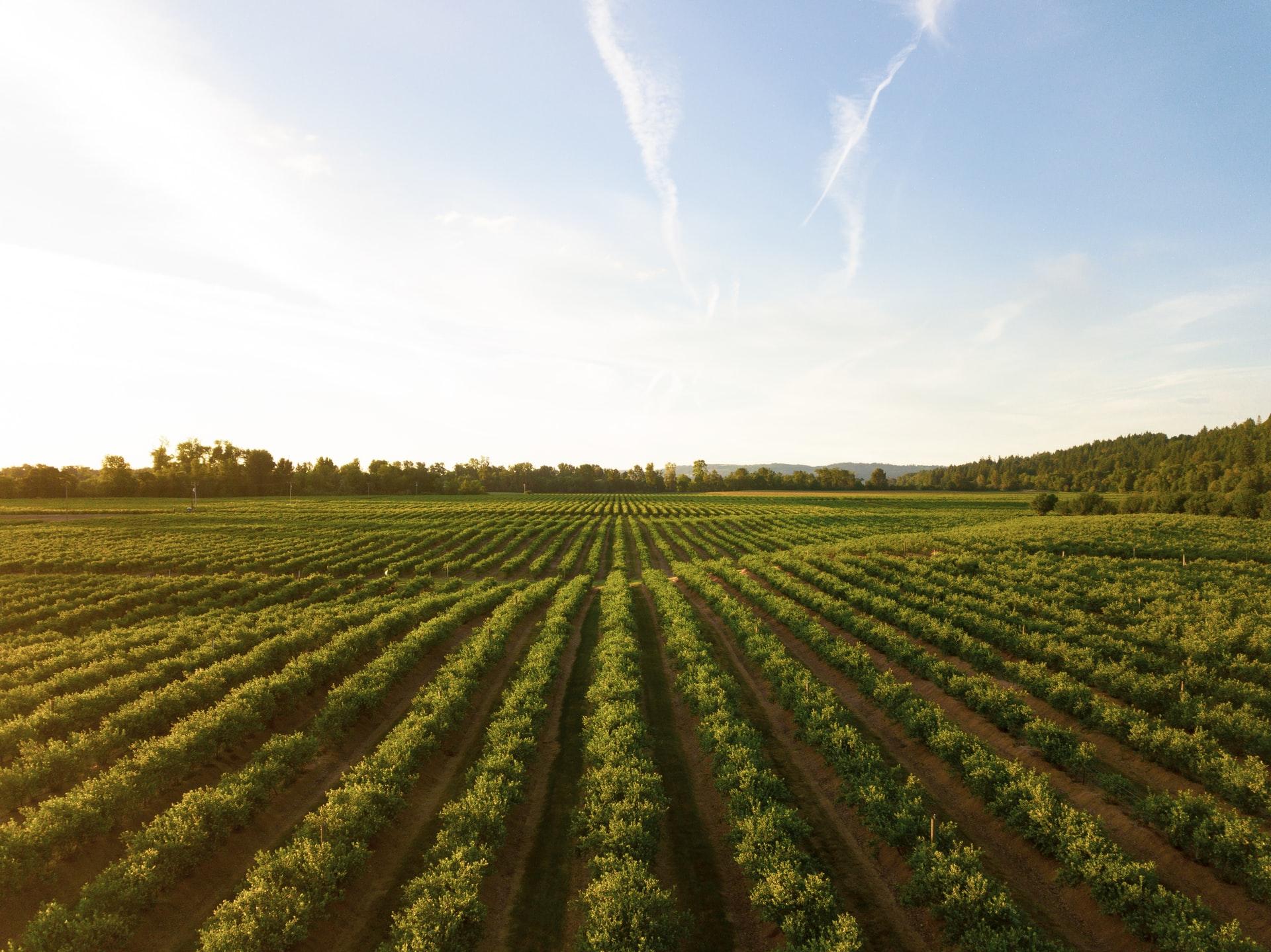 Soluzioni per l'agricoltura e Credito d'Imposta 2021