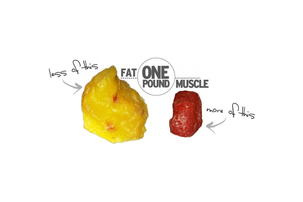 One Pound of Fat vs One Pound of Muscle