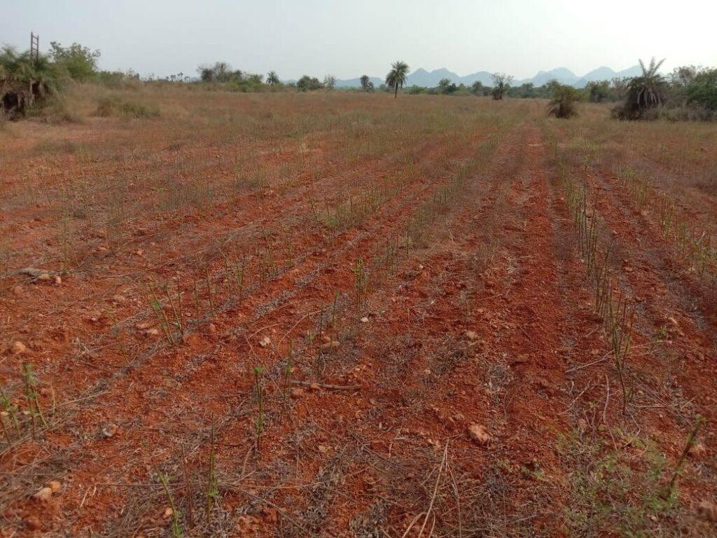 viswamatha_farms (14)