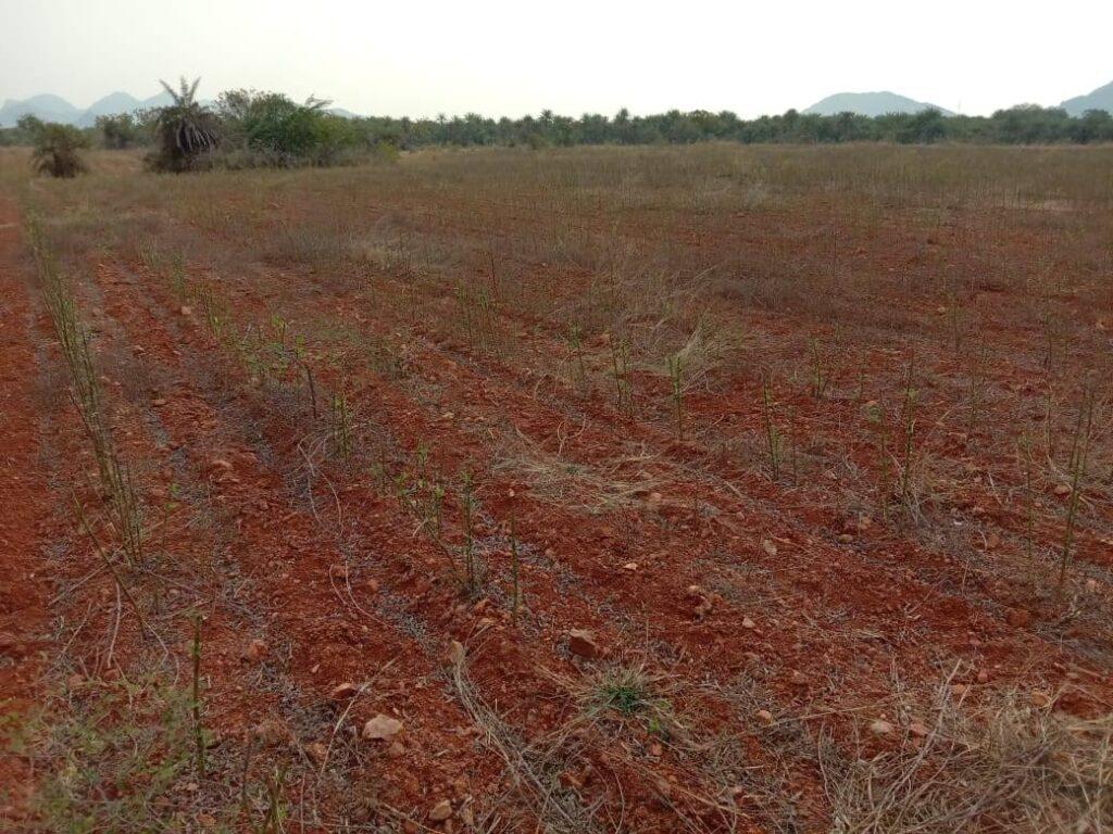 viswamatha_farms (16)