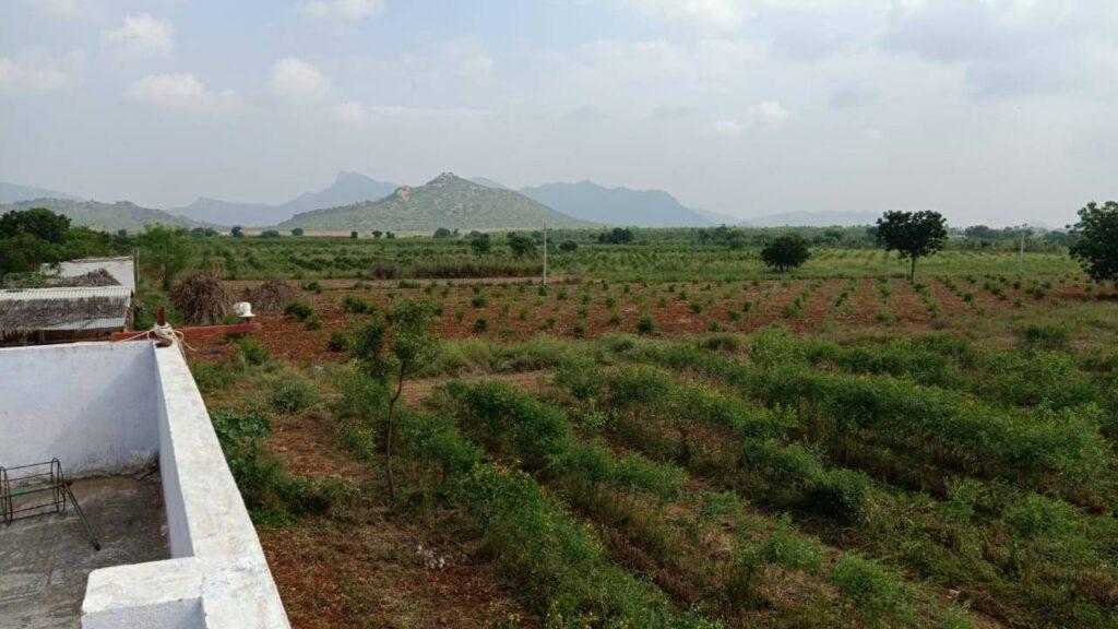 viswamatha_farms (5)