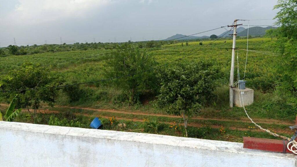 viswamatha_farms (7)