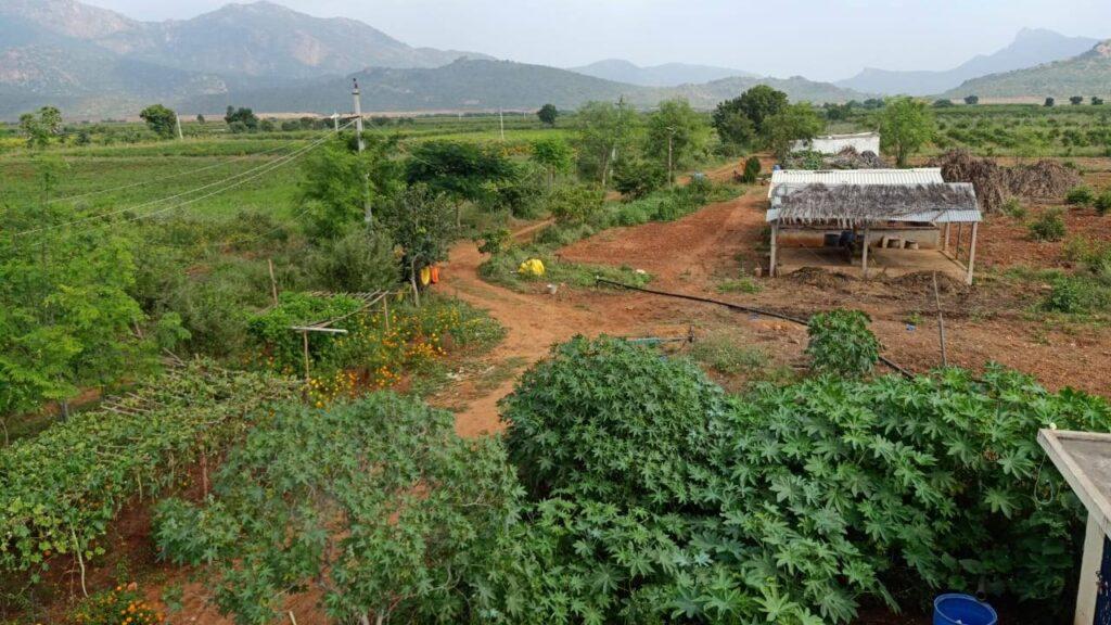 viswamatha_farms (8)