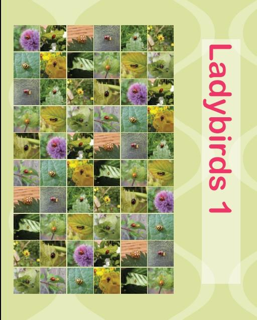 Ladybirds1