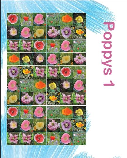 Poppys1