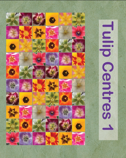 Tulipcentres1
