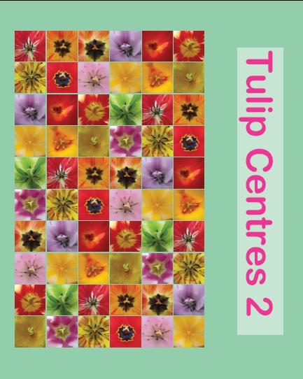 Tulipcentres2