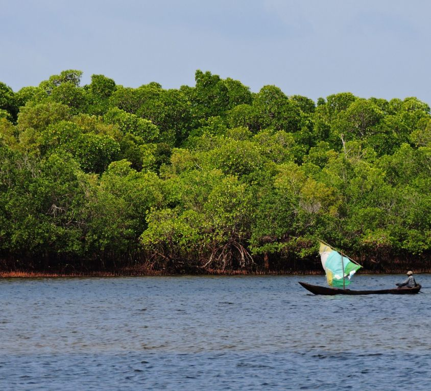 Fishing boat by mangroves