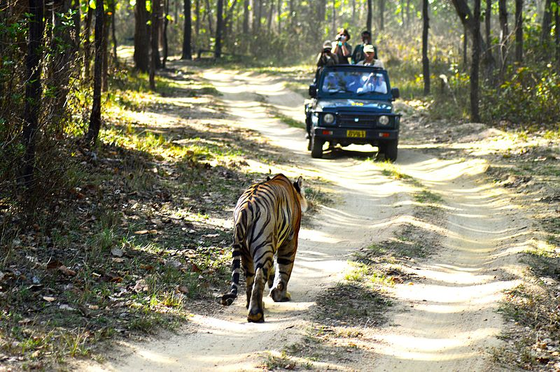 Jungle_safari_-_Kanha_National_Park