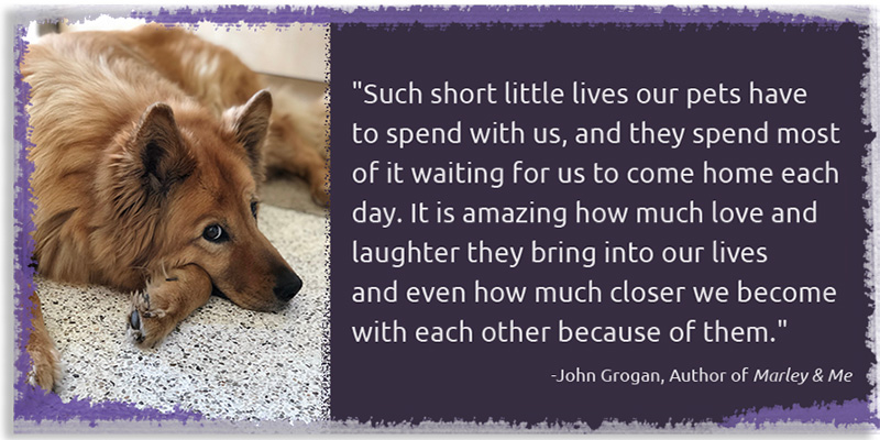 Such short little lives our pets have to spend with us, and they spend most of it waiting for us to come home each day.  It is amazing how much love and laughter they bring into our lives and even how much closer we become with each other because of them. - John Grogan, Author of Marley & Me