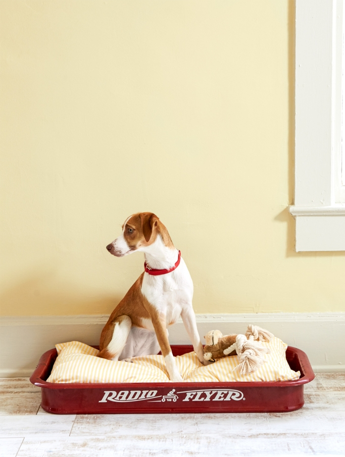 Little Red Wagon Dog Bed