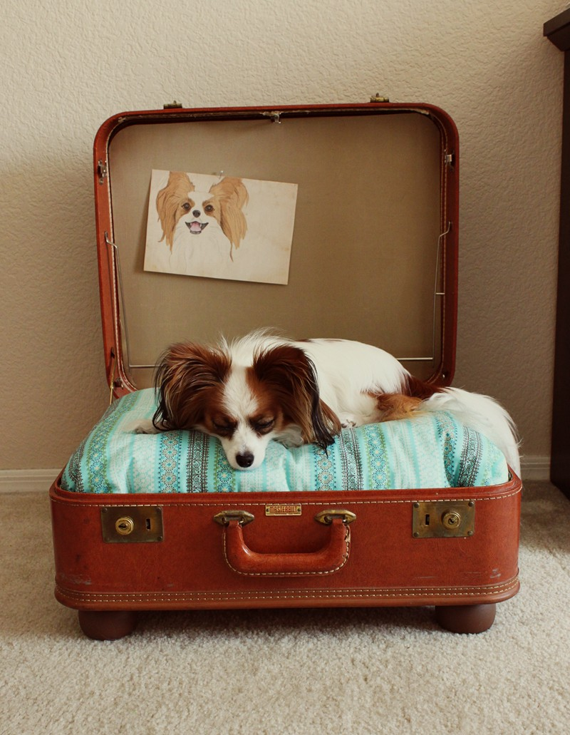 Recycled Suitcase Dog Bed