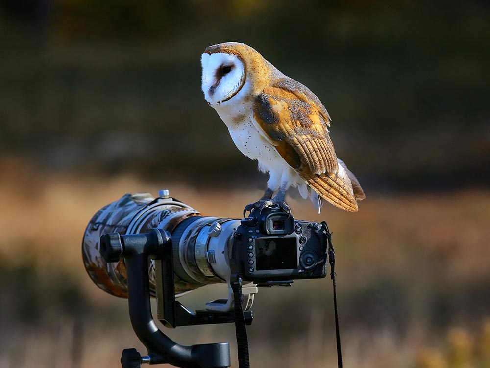 Bird Photography (16)