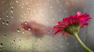 30 HD Rain Wallpapers For Your Desktop