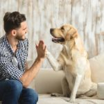 How to Keep Your Dog Happy by Creating the Perfect Room