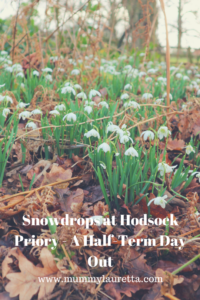 Snowdrops at Hodsock Priory Pin