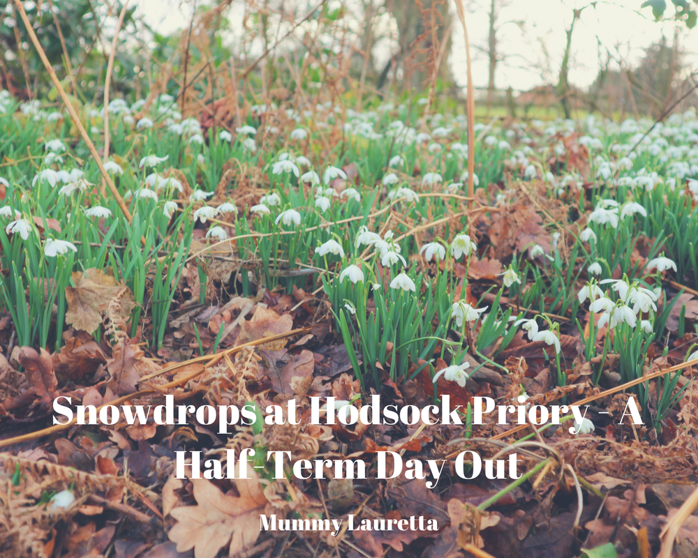 Snowdrops at Hodsock Priory blog