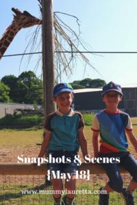 Snapshots & Scenes May 18 Pin