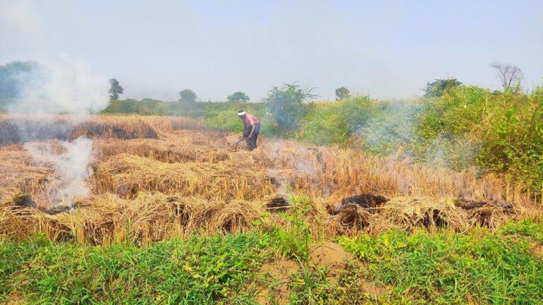 धक्कादायक! शेतकऱ्याने स्वतःच्या पिकाला लावली आग