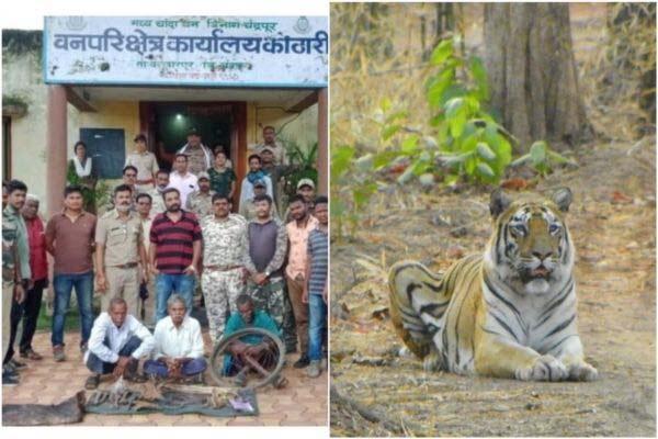 वाघाची शिकार करुन अवयवांची विक्री : वनसमितीच्या सदस्याला अटक