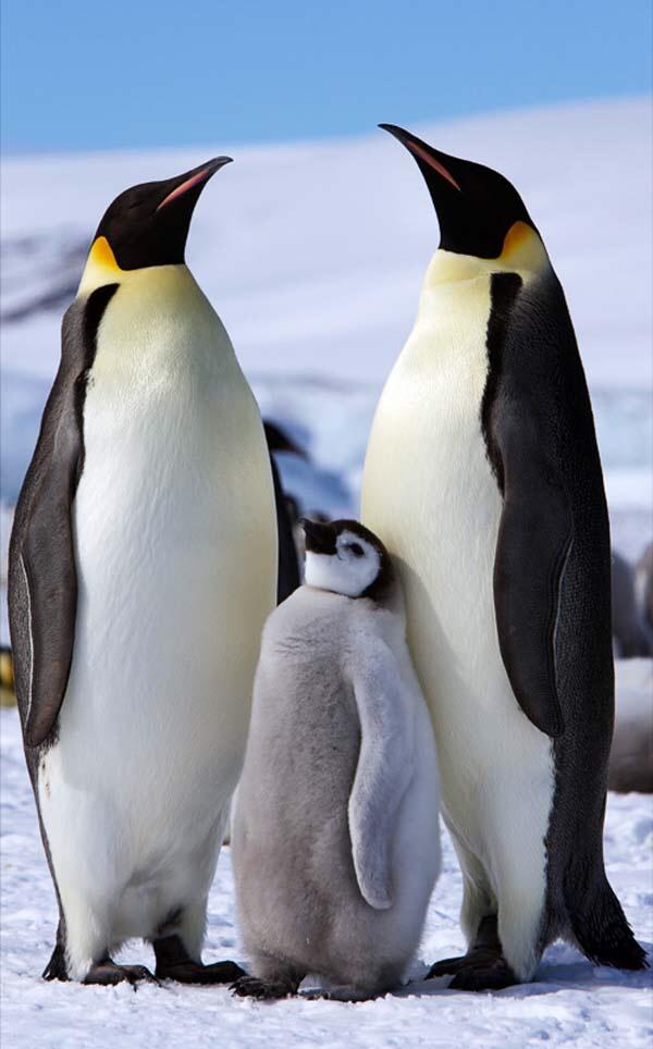 पेंग्वीनसाठी काढले जाणारे १५ कोटींचे टेंडर मुंबई महापालिकेने घेतले मागे