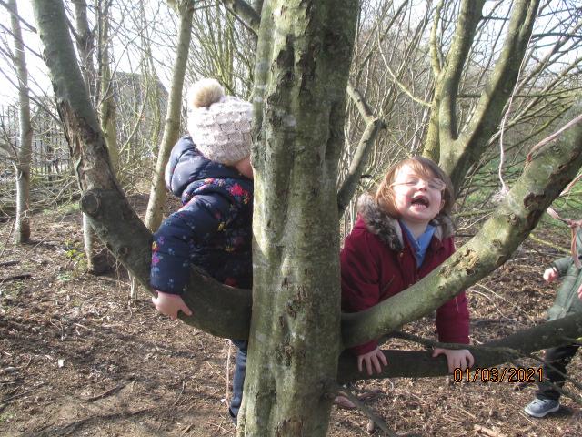 Sunbeams-nursery-climbing-trees